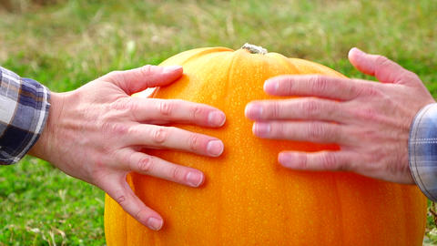 Male hands gently touch vivid and glossy skin of matured pumpkin, slow motion Footage