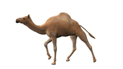 camel ,loop, animation, Alpha channel Animation