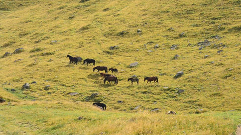 Herd of horses in mountains Footage