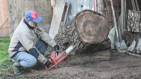 Man With Chainsaw Cutting Walnut Log ライブ動画