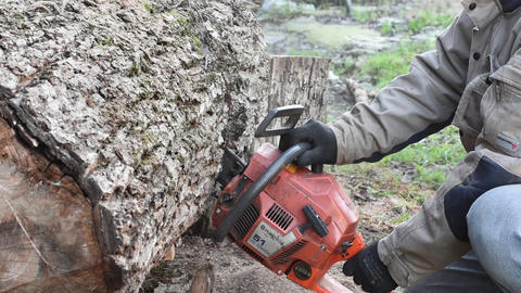 Man With Chainsaw Cutting Walnut Log Live Action