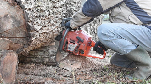 Man With Chainsaw Cutting Walnut Log Filmmaterial