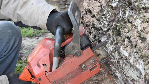 Man With Chainsaw Cutting Walnut Log Footage
