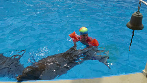 Little child swim with dolphins in the pool Footage