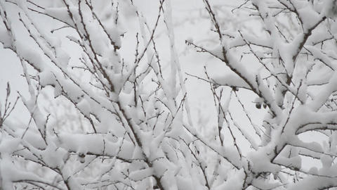 Tree branches with snowdrifts Footage