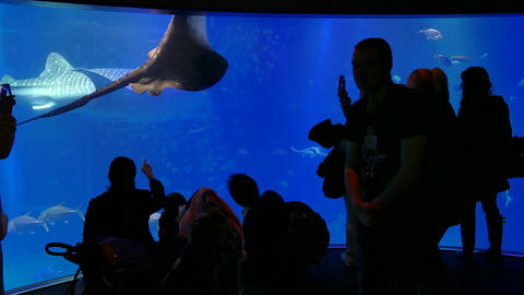 Osaka Aquarium In Japan Asia With People Visitors Sharks Fish Filmmaterial