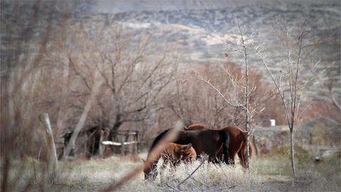 Family Of Wild Horses Footage