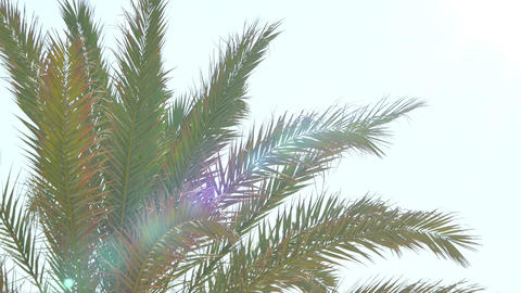 Video of palm tree on the blue sky in 4K Footage