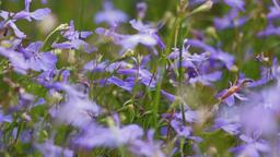 detail of purple flowers Footage