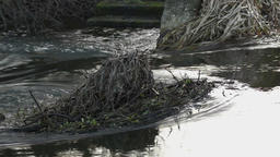 Slow flowing river with old cane leafs Footage