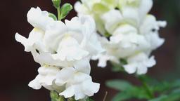 detail of white flowers ภาพไม่มีลิขสิทธิ์