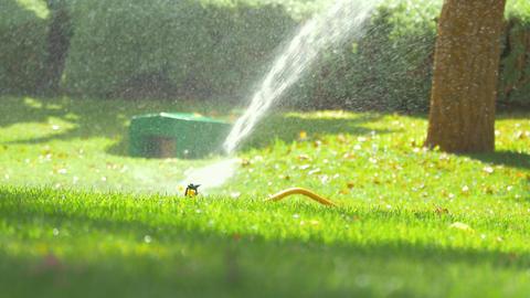Video of sprinkler in 4k Footage