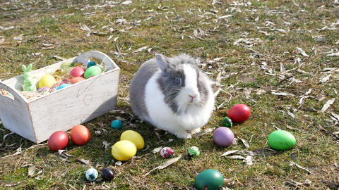 Dutch bunny near the multicolor eggs