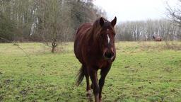 Horse walking towards camera Footage