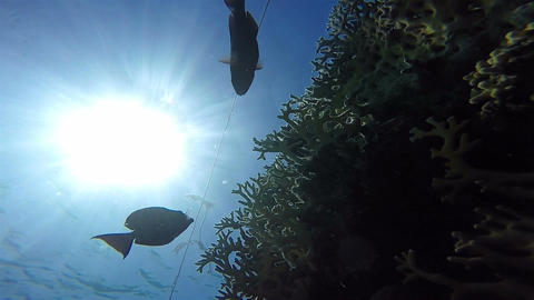 Corals from below, Sun in Sea, Static Scene, Red Sea Footage