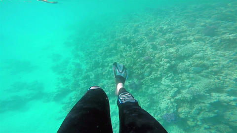 Legs with flippers underwater Footage
