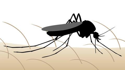 [alt video] Mosquito bite animation