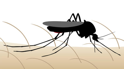 Mosquito bite animation CG動画素材