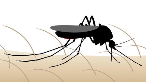 Mosquito bite animation Animation