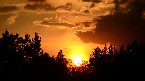 Sunset with Tree Silhouettes Footage