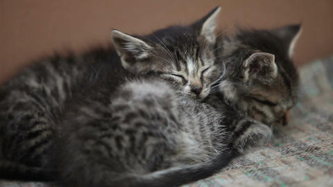 Sleeping in embrace two kitten Filmmaterial