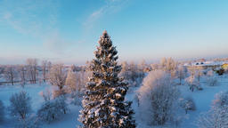 Snow landscape. Winter trees. Sunset. Aerial footage. Flying around pine tree Footage