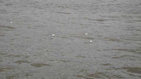 Seagulls floating on the waves of the river Footage
