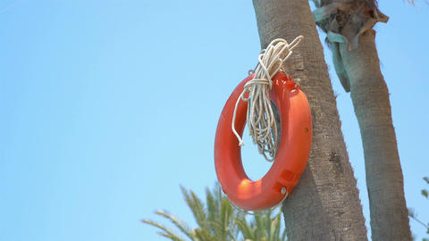 Video of orange lifebuoy on the palm tree in 4K Filmmaterial