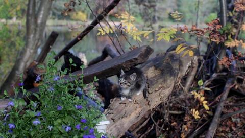 Lonely striped little kitten in garden Footage