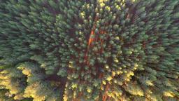 Flight over the woods. Nature landscape. Aerial footage Footage