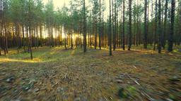 Flying between trees. Sunset. Aerial footage Footage