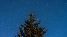 Time lapse of night sky in forest with pine tree and stars