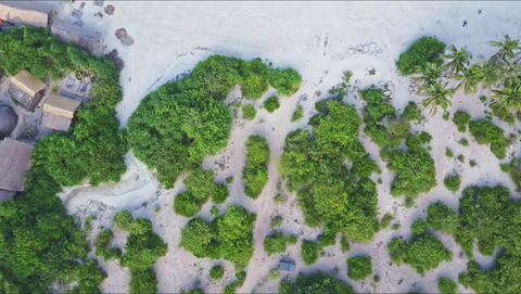 Aerial View from Green Trees on Beach to Foamy Ocean Surf