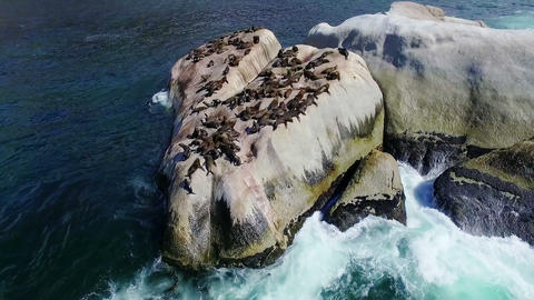 Group of sea lions on rocks between the sea Live Action