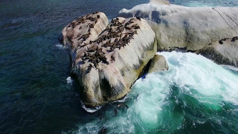 Group of sea lions on rocks between the sea, Live Action