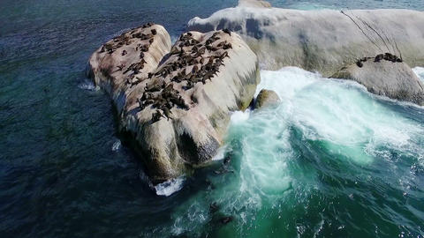 Group of sea lions on rocks between the sea Stock Video Footage