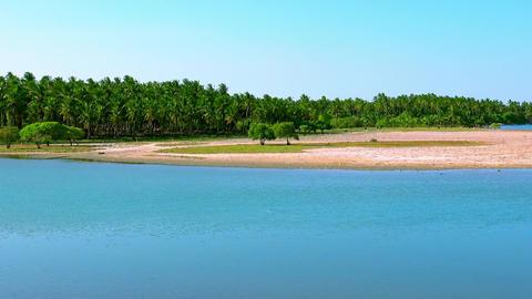 Coconut tree plantation on riverbank near tranquil river. Sri Lanka Footage