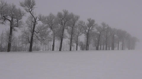 Misty winter landscape Footage