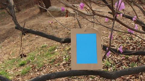 Borame photoframe21 Filmmaterial