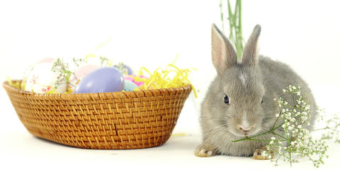 Easter eggs in wicker basket and Easter bunny Live Action