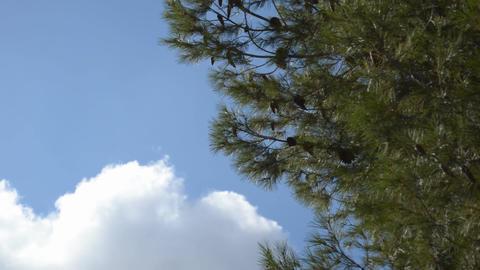 Big White Cloud Footage