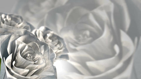 rotating white roses, wedding theme - 3D render. seamless loop Animation