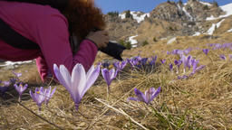 Nature photographer shooting flowers on mountain Footage