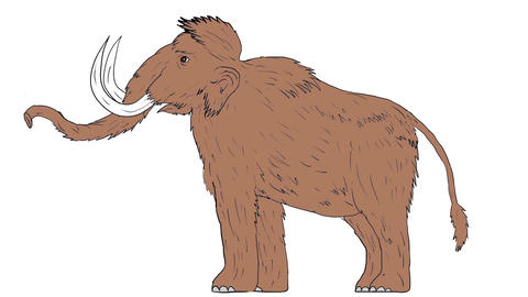 Woolly Mammoth Raising Tusk 2D Animation Animation