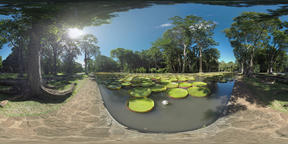 360 VR View to the park and pond with giant lily pads, Mauritius Footage