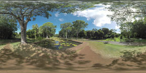 360 VR Green park with big trees and lily pads in the pond, Mauritius Filmmaterial