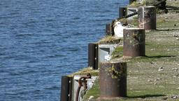Great Britain Scotland Highland Invergordon seagull at a pier
