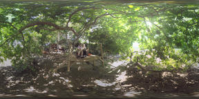 360 VR Couple resting with pad in the shade of trees, Mauritius Footage