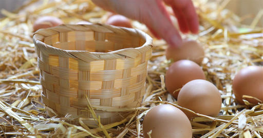 Local farmer collects eggs from chicken coop Filmmaterial