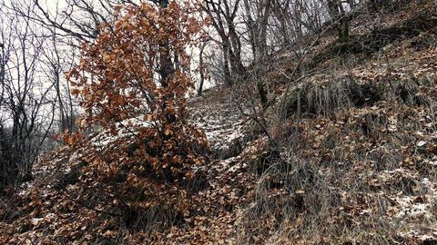 Autumn Snowy Forrest Footage
